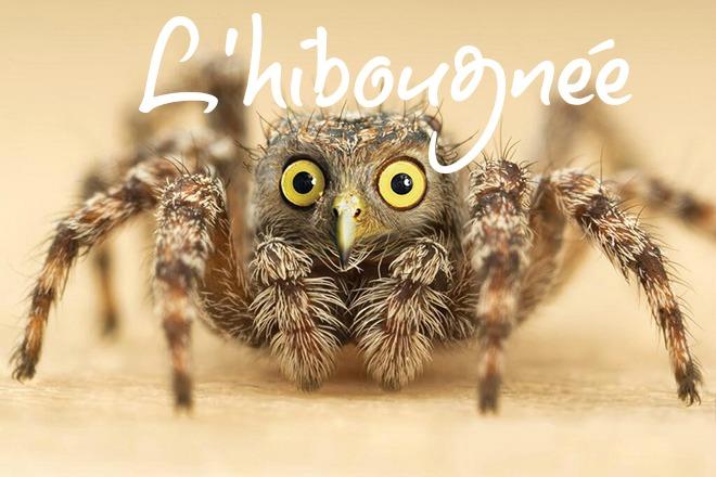 photoshop-va-trop-loin-animal-hybrids-002-araigne-avec-une-tete-de-chouette-2