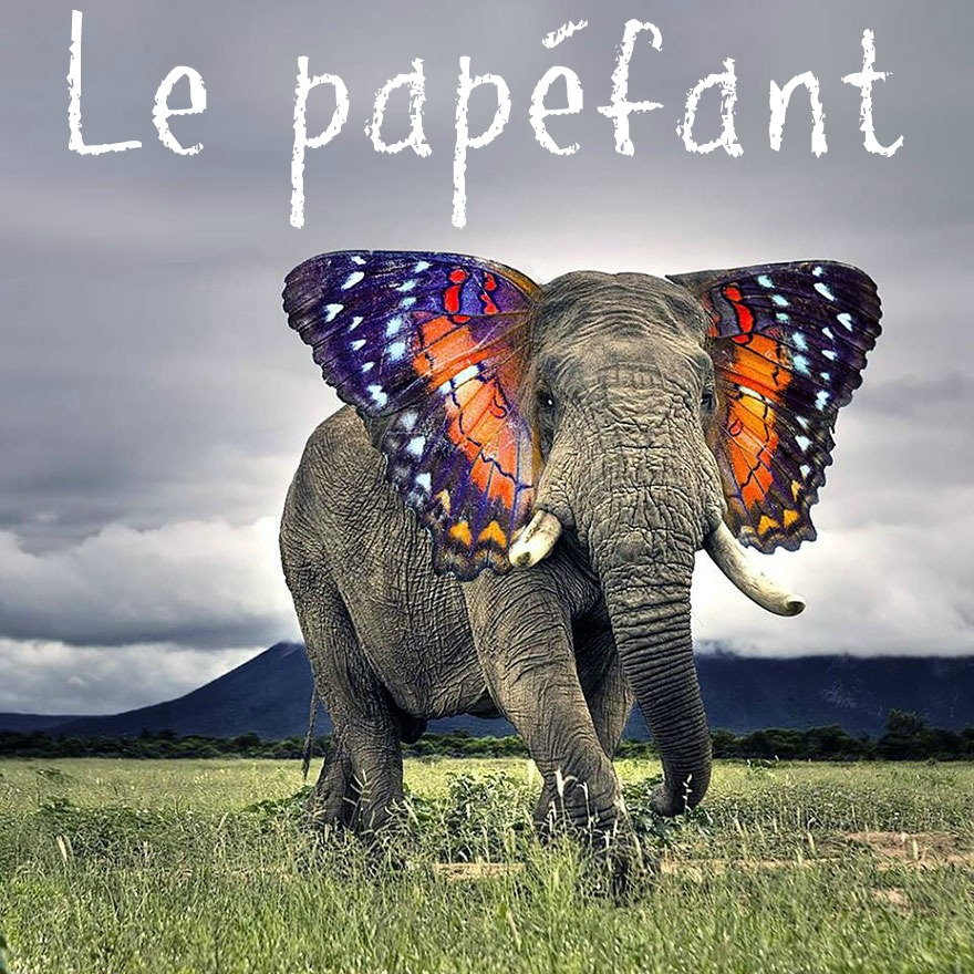photoshop-va-trop-loin-animal-hybrids-003elephant-papillon copie