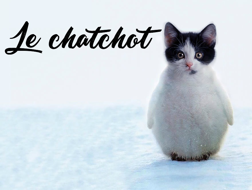 photoshop-va-trop-loin-animal-hybrids-011-le-chatgouin-chat-et-pingouin copie