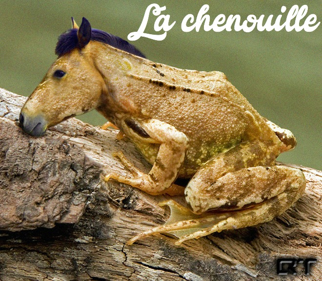 photoshop-va-trop-loin-animal-hybrids-020-cheval-crapaud